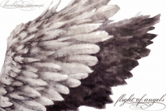 haibane-renmei-angel-wings-wallpaper